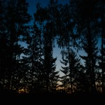 Sunrise in the stillness of the forest